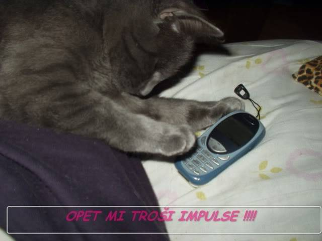 Natjecaj - mačke 7ec2scd