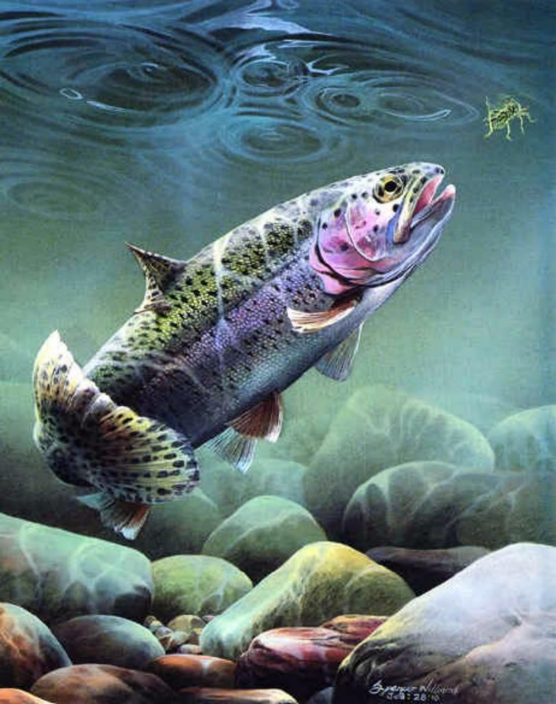 Omaž ribolovcu i ribolovu - Page 2 Grass_hoppinlarge3