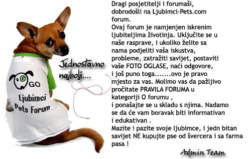 Kućni ljubimci - Forum - Portal Novo-1