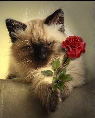 FELIZ CUMPLE !!!!!! - Pagina 5 Flower146