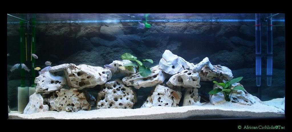 novo Projeto Malawi Aquario2
