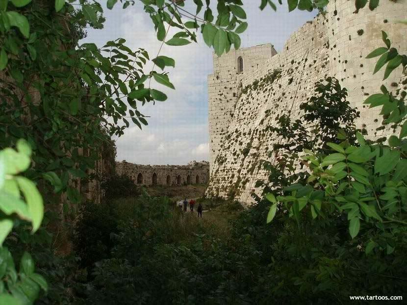 صور من قلعة الحصن Alhoson_castel202450820154