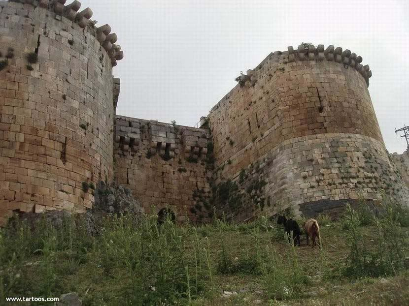 صور من قلعة الحصن Alhoson_castel202450820229