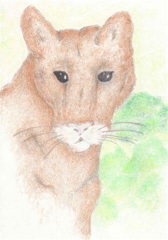 Various artsy things =) Cougar
