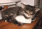 OMG kittie