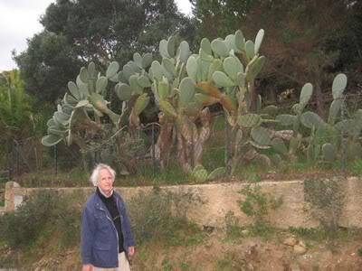 Voyage en Corse (2) FiguiersBarbarie