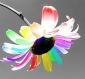 dhuroni lule nje antari..:):) - Faqe 3 928471333_m