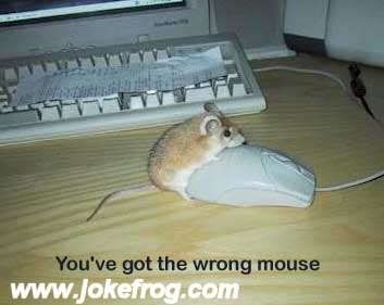 Randomly Funny Animals-Rodents-MouseHump