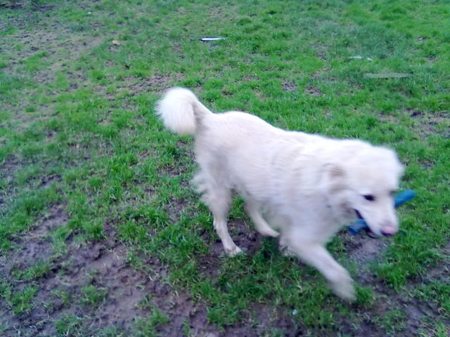 Rudy Gorgeous White boy homed 070120121119