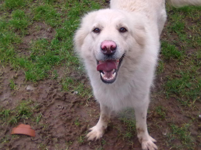 Rudy Gorgeous White boy homed 070120121122