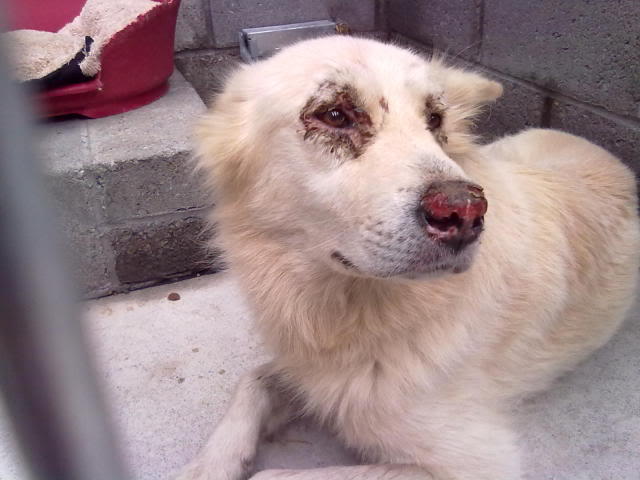 Rudy Gorgeous White boy homed 12092011819