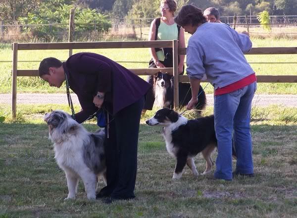 Régionale d'élevage Berger Australien à Sendets 16/09/07 - Page 5 100_4372bb
