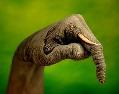 Part 14 / 10 Elephant