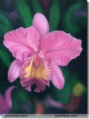 BUSQUEMOS HERMOSAS FLORES - Página 9 Flores_Vkky0