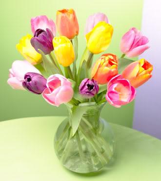 Nje lule per... AZzkbPsQedey