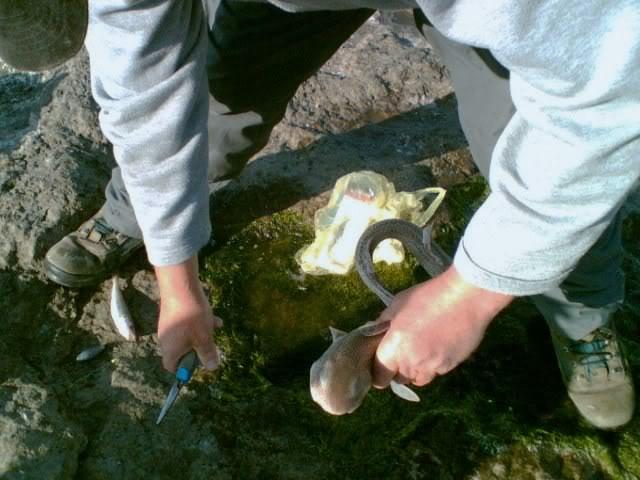 FISHY WEEKEND 1ROGERWITHDOG