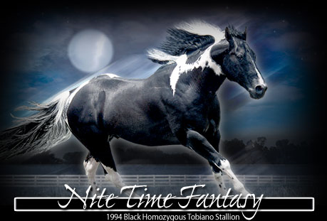 Beautiful horses for breeding (NOT SALE) Nitetimefantasy
