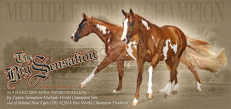 Beautiful horses for breeding (NOT SALE) TheBigSensation