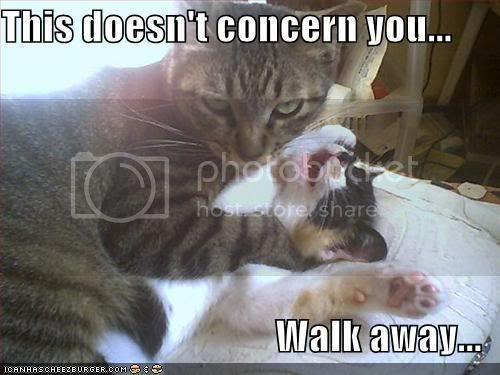 Chibi Station! - Page 3 Funny-pictures-cat-strangles-cat