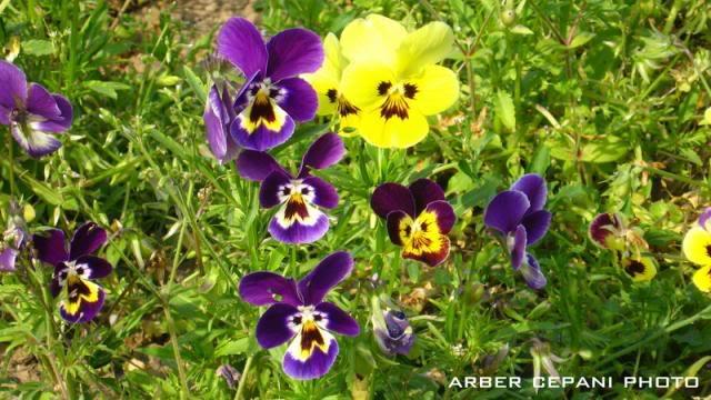 Kopshti botanik ne Tirane 17