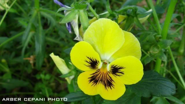 Kopshti botanik ne Tirane 22