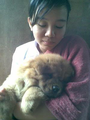 Chow Chow For Sale (Now accepting reservation) Bebechow005