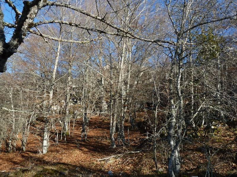 ALGORRI (El viejo camino de Lakuntza) P1100959_resize