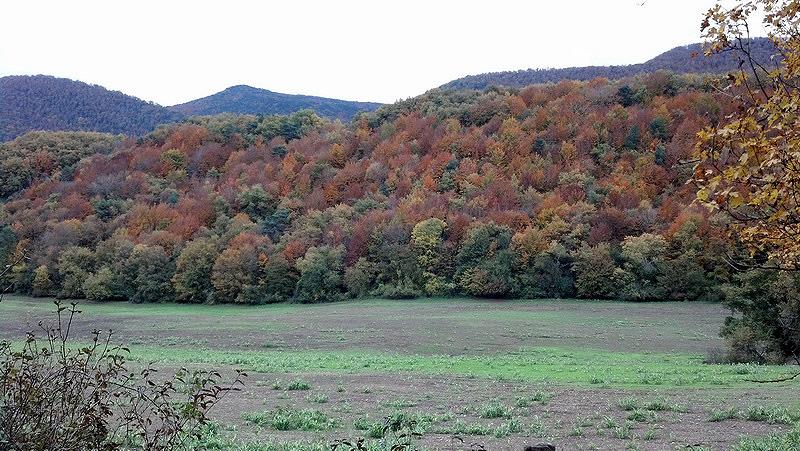 ARRANOMENDI (La paleta de colores) IMG_20141116_121040_348_resize