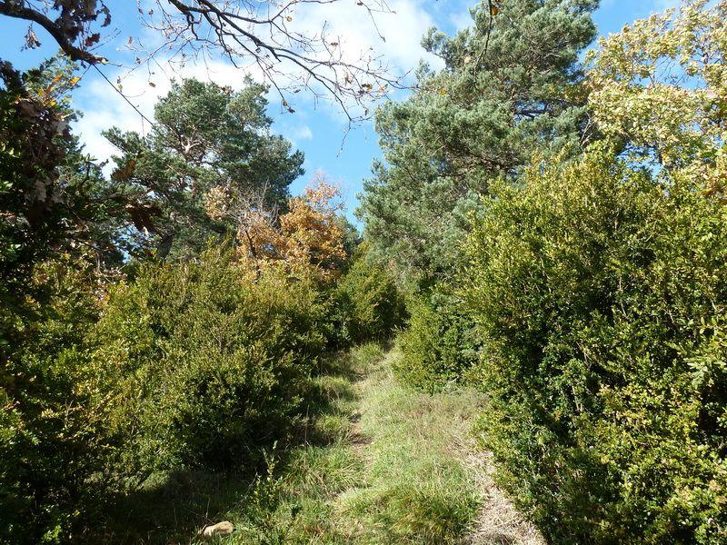 BEIEGU (Un paseo para disfrutar) P1120101_resize