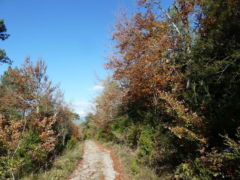 BEIEGU (Un paseo para disfrutar) P1120115_resize