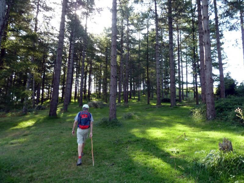 BELITZ (Un paseo sofocante) P1110831_resize