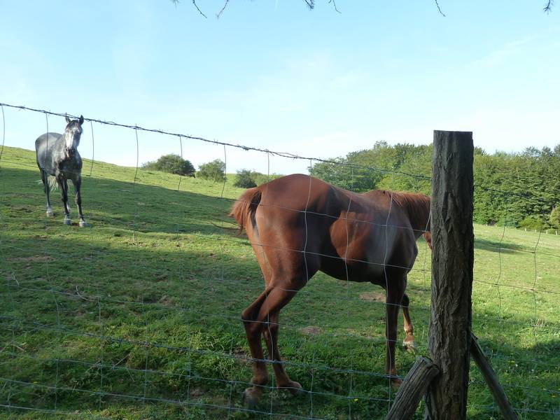 BELITZ (Un paseo sofocante) P1110832_resize