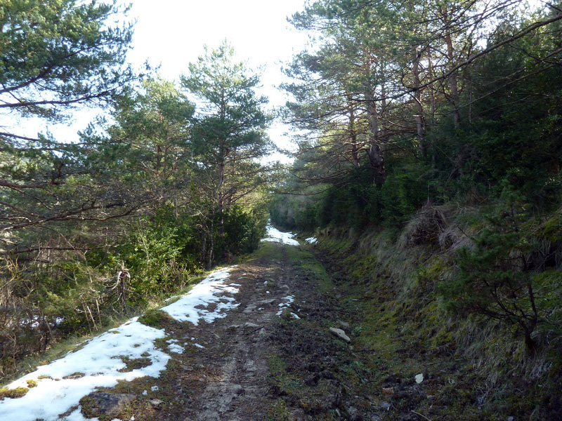 EGULBATI (Nieve y tranquilidad en el valle de Egüés) P1120505_resize