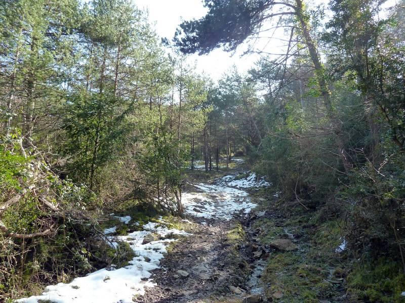 EGULBATI (Nieve y tranquilidad en el valle de Egüés) P1120506_resize