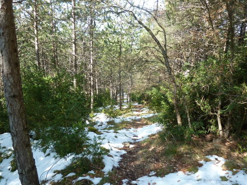 EGULBATI (Nieve y tranquilidad en el valle de Egüés) P1120528_resize