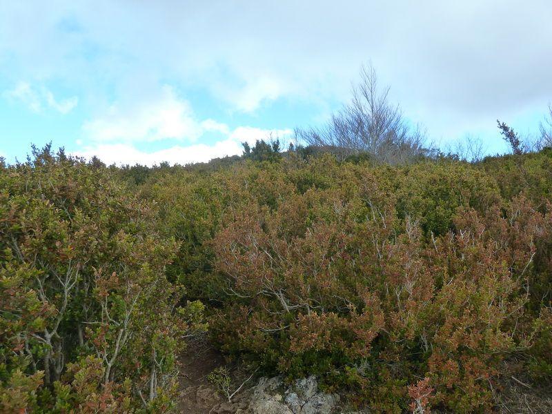 KARRASKAL (Otra cima de la sierra de Alaitz) P1120657_resize