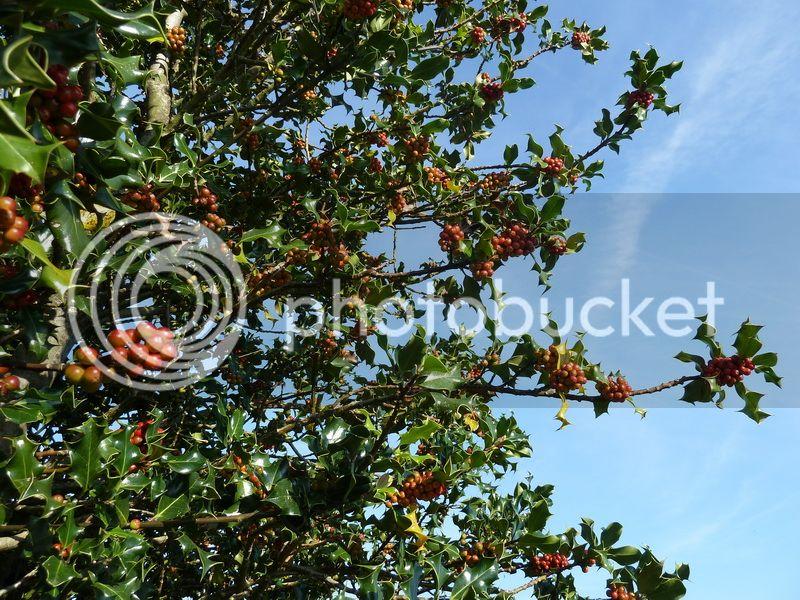 ONEAGA (El pulmón de Ibardin) P1100727_resize