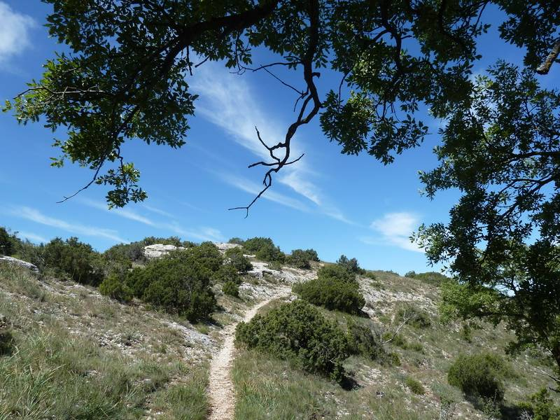ROCA FALCONERA (El paseo de las águilas en el Montsant) P1100054_resize
