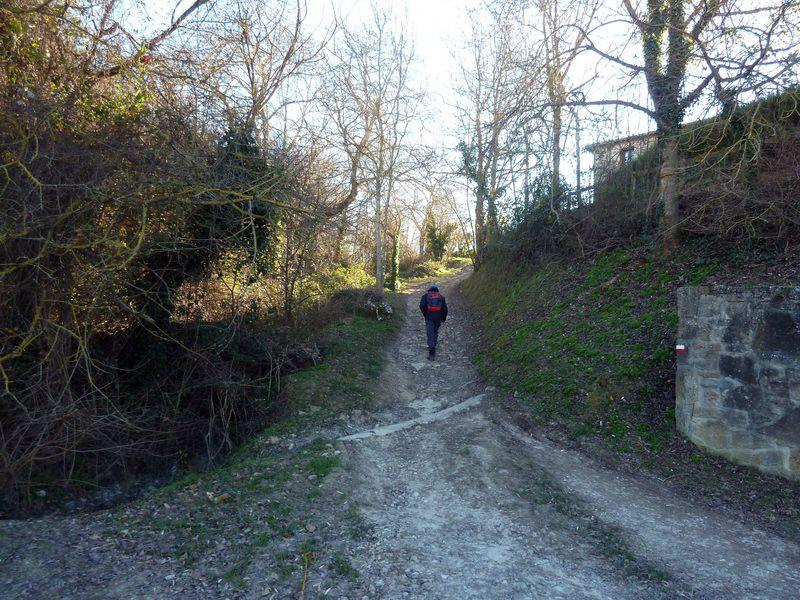 TANGORRI Y DONATSAI (Un paseo invernal) P1100912_resize