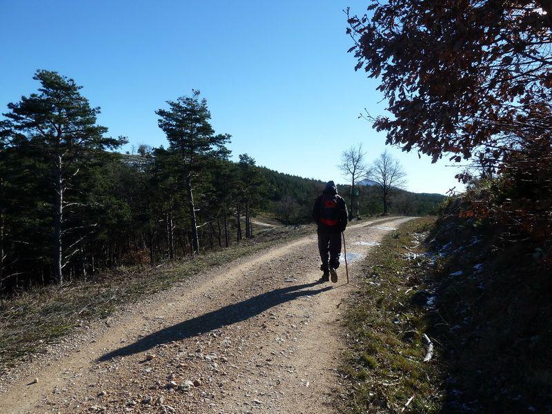 TANGORRI Y DONATSAI (Un paseo invernal) P1100918_resize