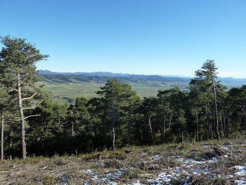 TANGORRI Y DONATSAI (Un paseo invernal) P1100923_resize
