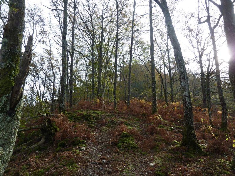 SARATSAGA Y URTIETAKO GANA (Un paseo cerca de casa) P1140002_resize
