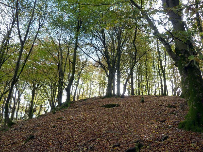 SARATSAGA Y URTIETAKO GANA (Un paseo cerca de casa) P1140003_resize