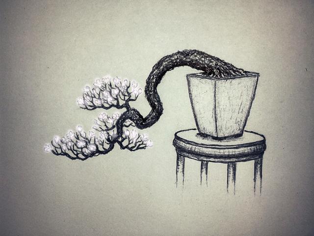 Piccolo Prunus mahaleb Mahaleb06-2_zps8f88c925