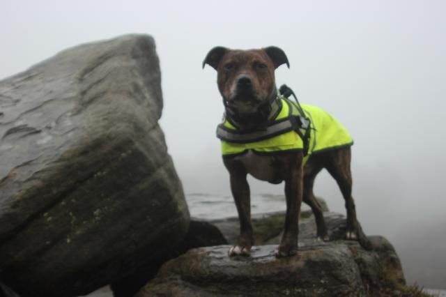 A foggy soggy dog walk! IMG_6213
