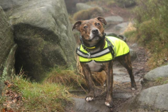 A foggy soggy dog walk! IMG_6244