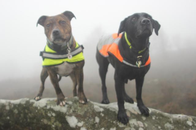 A foggy soggy dog walk! IMG_6345