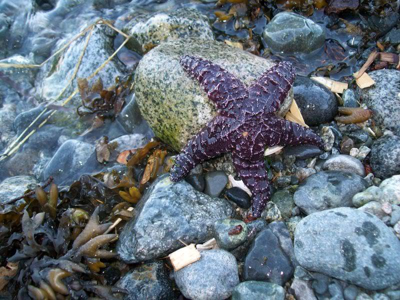Hello from Vancouver, Canada! Starfish