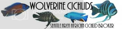 Welcome, Sponsors! WolverineCichlids