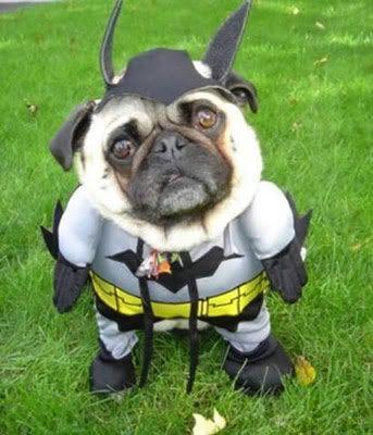 Trick or Treat. Batdog